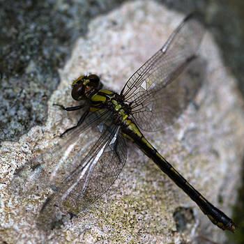 Dragonfly by Ian Wilson