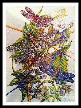 Dragonfly Illusion by Margaret Platt