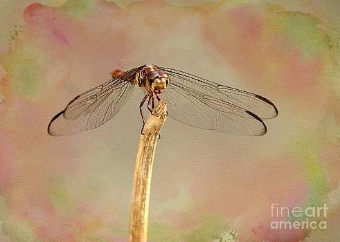 Sabrina L Ryan - Dragonfly in Fantasy Land