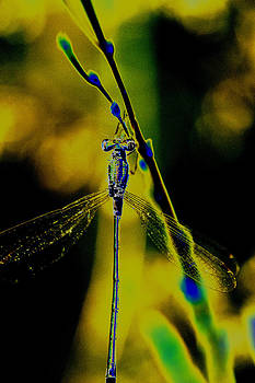Dragonfly in the sun by Patrick Kessler