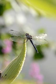 Dragonfly by Jennifer Wartsky