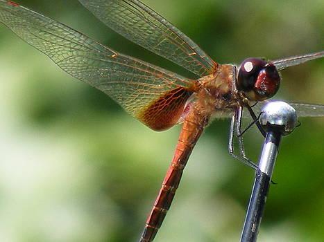 Dragonfly Karaoke by Rebecca Flaig