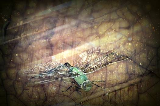 Dragonfly Leap of Faith by Dawna Morton