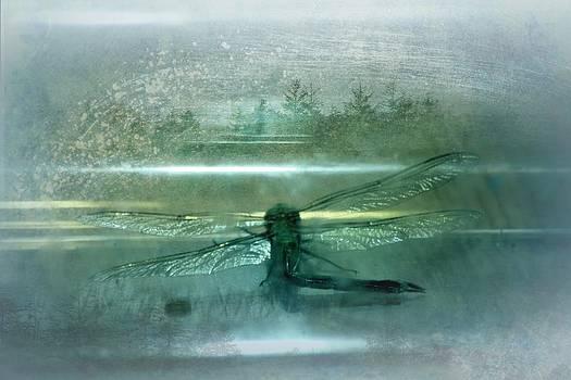 Dragonfly Macro 3 by Dawna Morton
