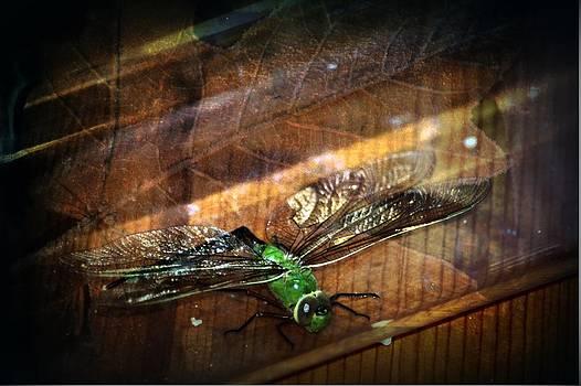 Dragonfly Macro 4 by Dawna Morton