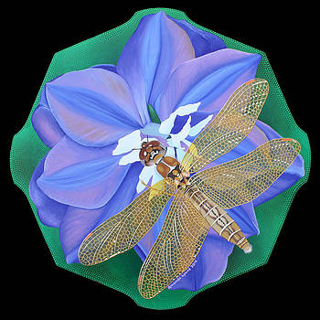 Dragonfly on Purple Flower by Amanda  Lynne