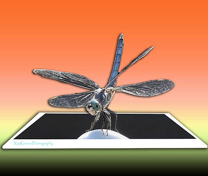 Dragonfly Out of Bounds by Kip Krause