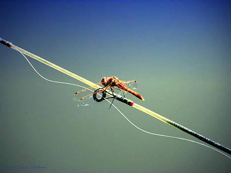 Joyce Dickens - Dragonfly Resting Station
