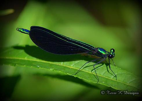 Dragonfly by Terri K Designs