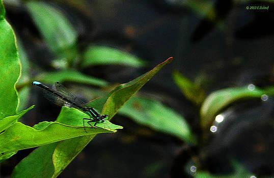 Dragonfly's Repose by Elizabeth S Zulauf