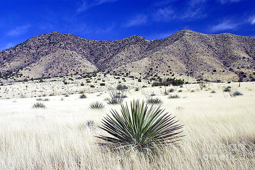 Douglas Taylor - DRAGOON MOUNTAINS - DESERT GRASSLAND