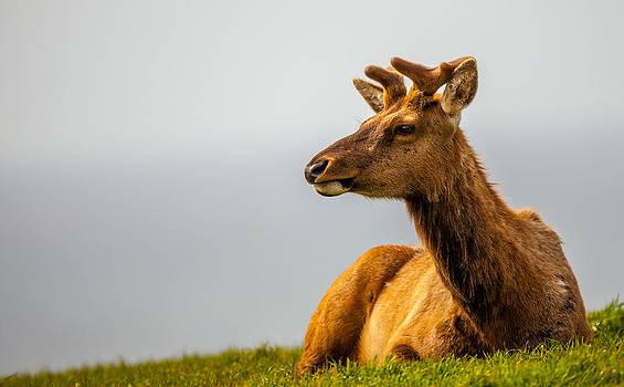 Kevin  Dietrich - Drake Elk