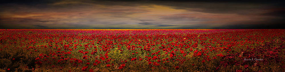 Drama over the Flower Fields by Angela A Stanton
