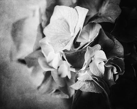 Lisa Russo - Dramatic Hydrangea in Black and White