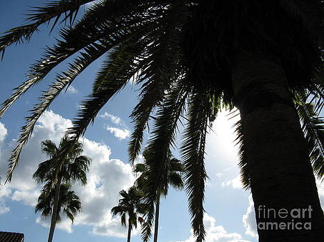 Dramatic Palm by Jeanne Forsythe
