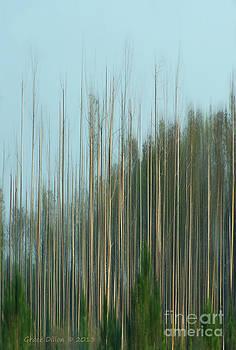Grace Dillon - Dream Forest