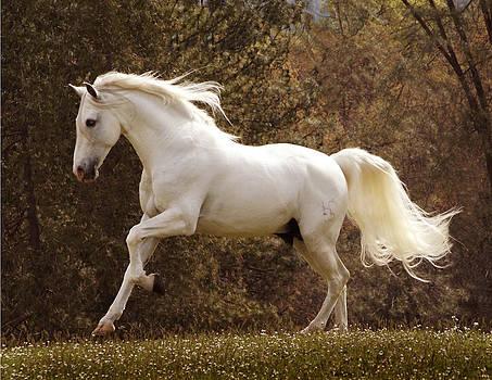 Dream Horse by Melinda Hughes-Berland