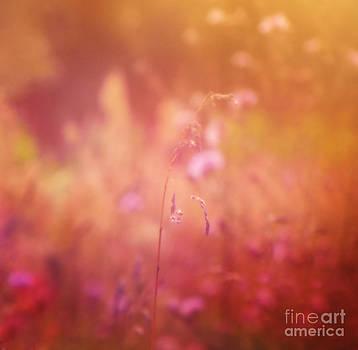 Dream of summer by Monika Pachecka