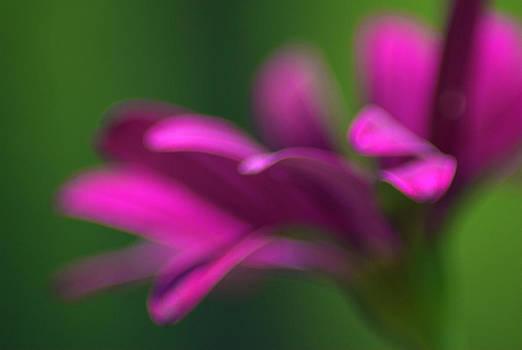 Dream Series - Purple by Judy Salcedo