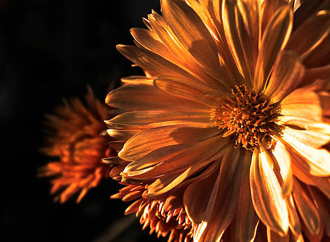 Dreaming Light by Vishal Kumar