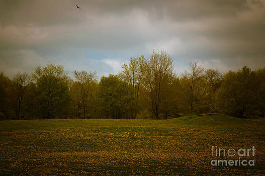 Dreamscapes - Field with Bird 1 by Kathi Shotwell