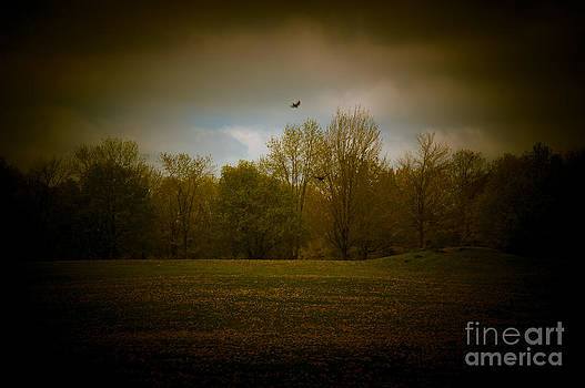 Dreamscapes - Field with Birds 3 by Kathi Shotwell