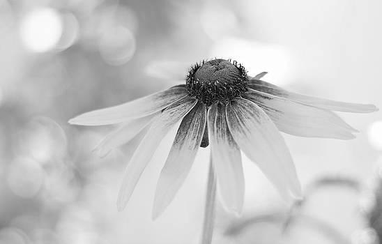 Dreamsicle Daisy by Virginia Folkman