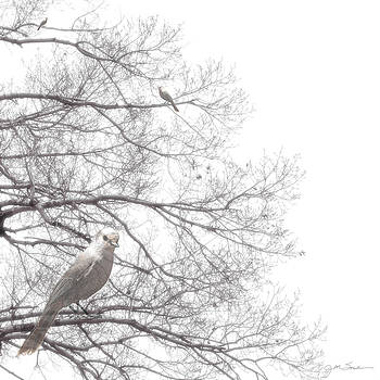 Dreamy Black and White Bird in Bare Tree Branches by Julie Magers Soulen