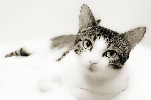Andee Design - Dreamy Cat 2