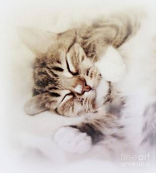 Dreamy Cat by Diana Besser