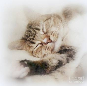 Dreamy Cat Sleeps by Diana Besser
