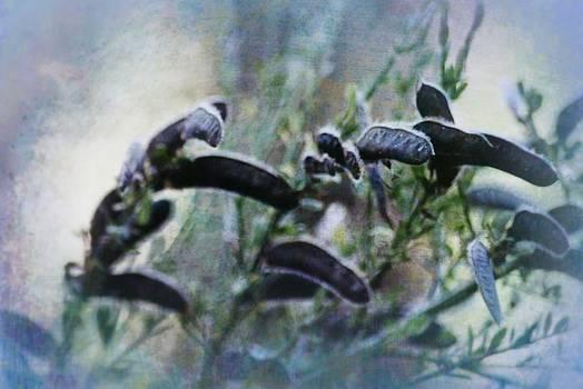 Dreamy Seedpods by Dawna Morton