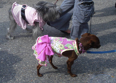 Dressed in Pink - Two Dogs in Miami by Jessica Gale