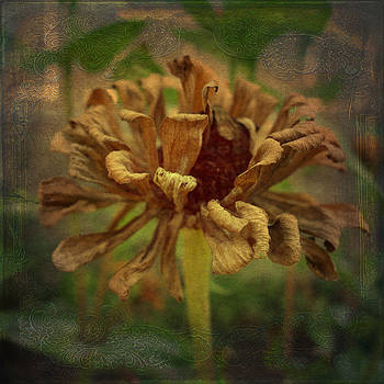 Dried Flower by Cindy Collier Harris