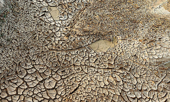 Dried mud pan it time of drought by Alexandr  Malyshev