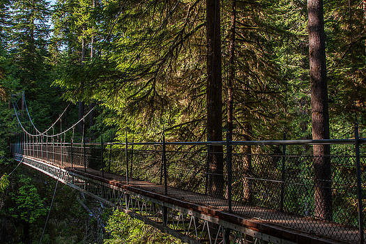 Drift Creek Falls Suspension Bridge by Craig Pifer