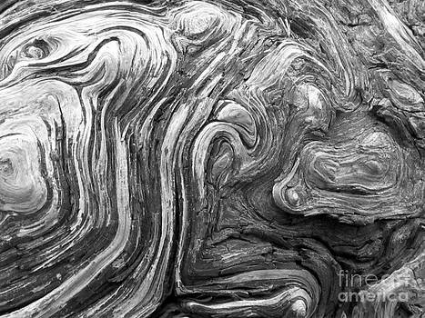 Barbara Henry - Driftwood