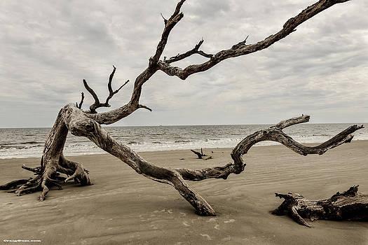Driftwood Beach by Craig Gum
