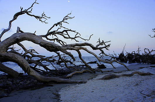 Laurie Perry - Driftwood Beach