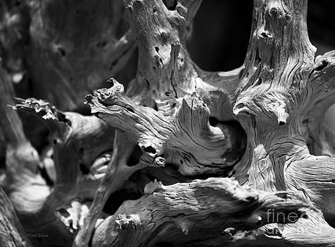 Michelle Wiarda - Driftwood Detail