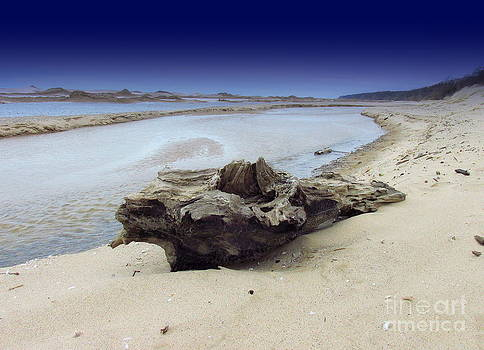Driftwood In The Sands Night Skies Of Lake Michigan by Jack  Martin