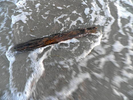 Kate Gallagher - Driftwood in the Water
