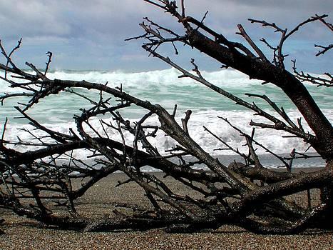 Driftwood by Mamie Gunning