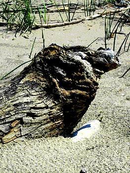 Driftwood by Mark Malitz