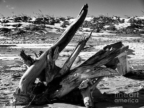 Driftwood by Nancie DeMellia