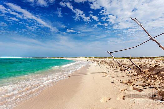 Jo Ann Snover - Driftwood on beautiful Boca Grandi beach