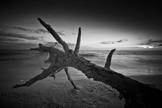 Driftwood On Bonita Beach by Bradley R Youngberg