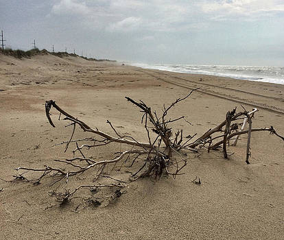 Driftwood on Hatteras  by Patricia Januszkiewicz