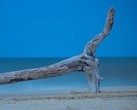 Driftwood on the beach by Derek Reichert