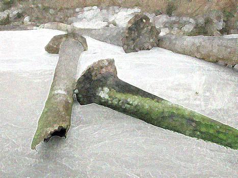 Driftwood Palms by Bob Richter